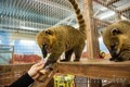 Продается единственный в областном городе контактный зоопарк